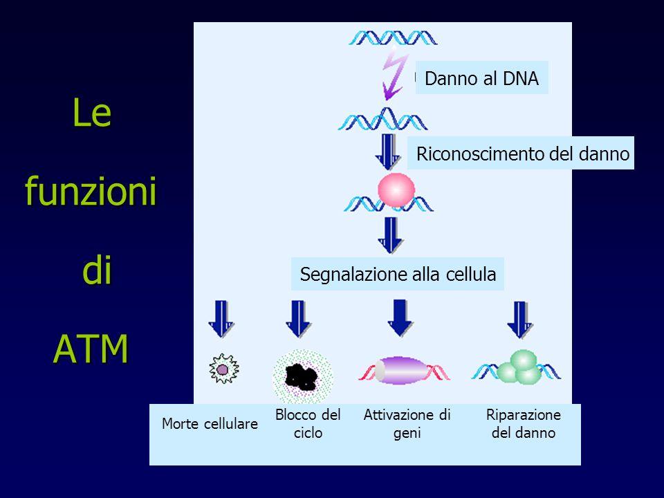 Le funzioni di ATM Danno al DNA Riconoscimento del danno