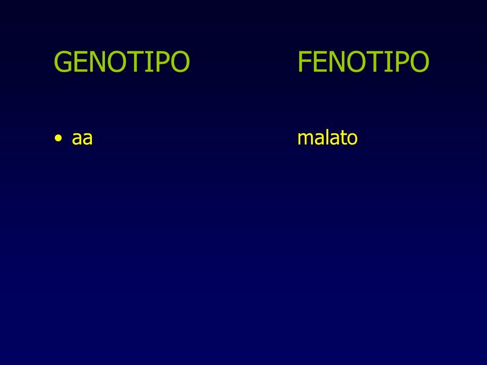 GENOTIPO FENOTIPO aa malato