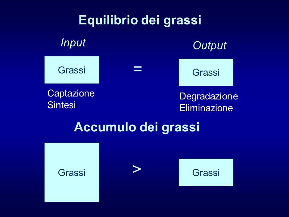 = > Equilibrio dei grassi Accumulo dei grassi Input Output Grassi