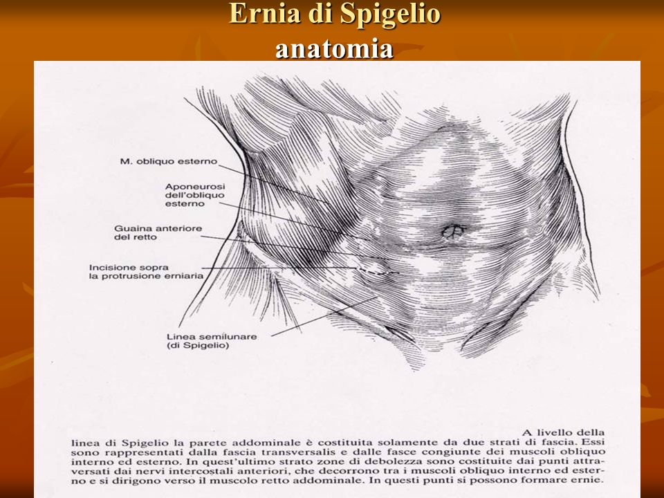 Ernia di Spigelio anatomia