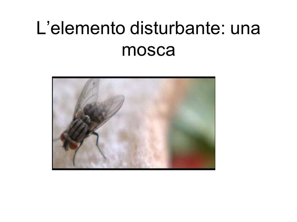 L'elemento disturbante: una mosca
