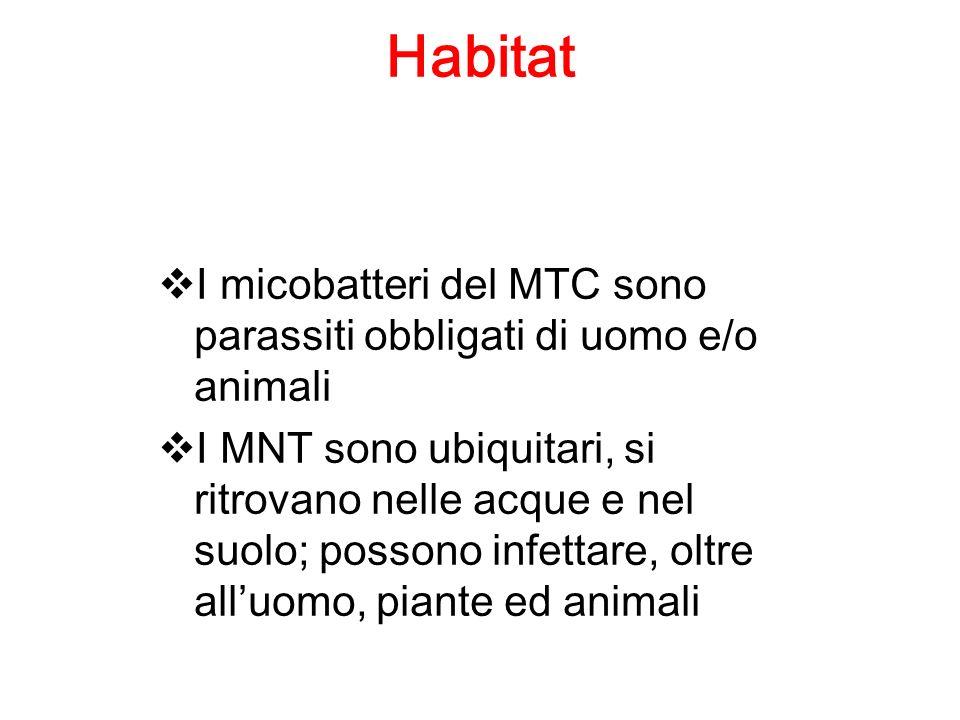 Habitat I micobatteri del MTC sono parassiti obbligati di uomo e/o animali.