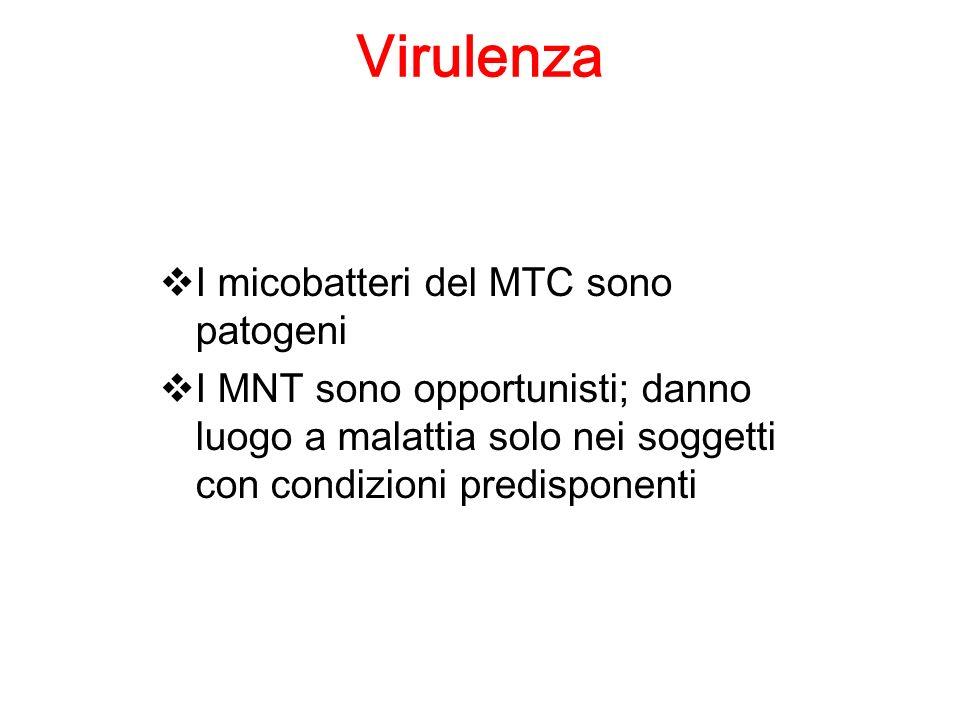 Virulenza I micobatteri del MTC sono patogeni