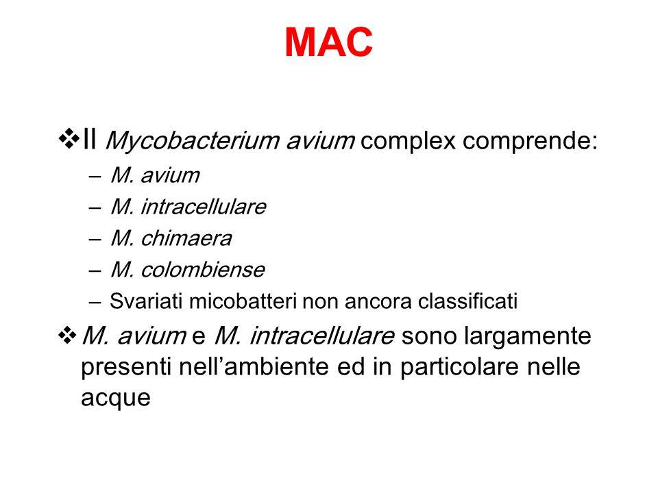 MAC Il Mycobacterium avium complex comprende:
