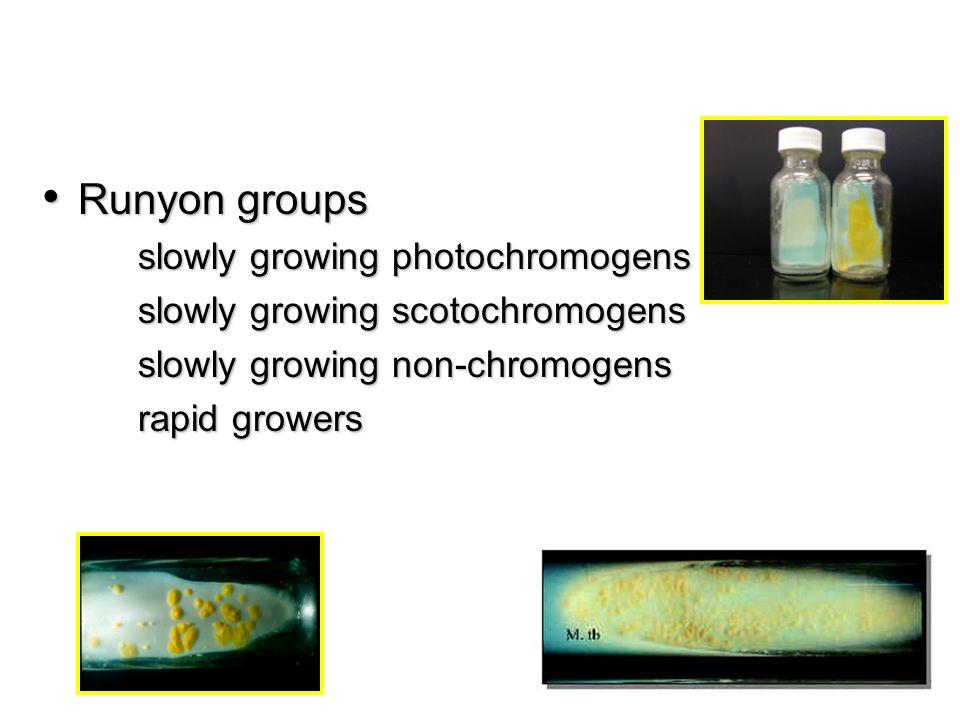 Runyon groups slowly growing photochromogens