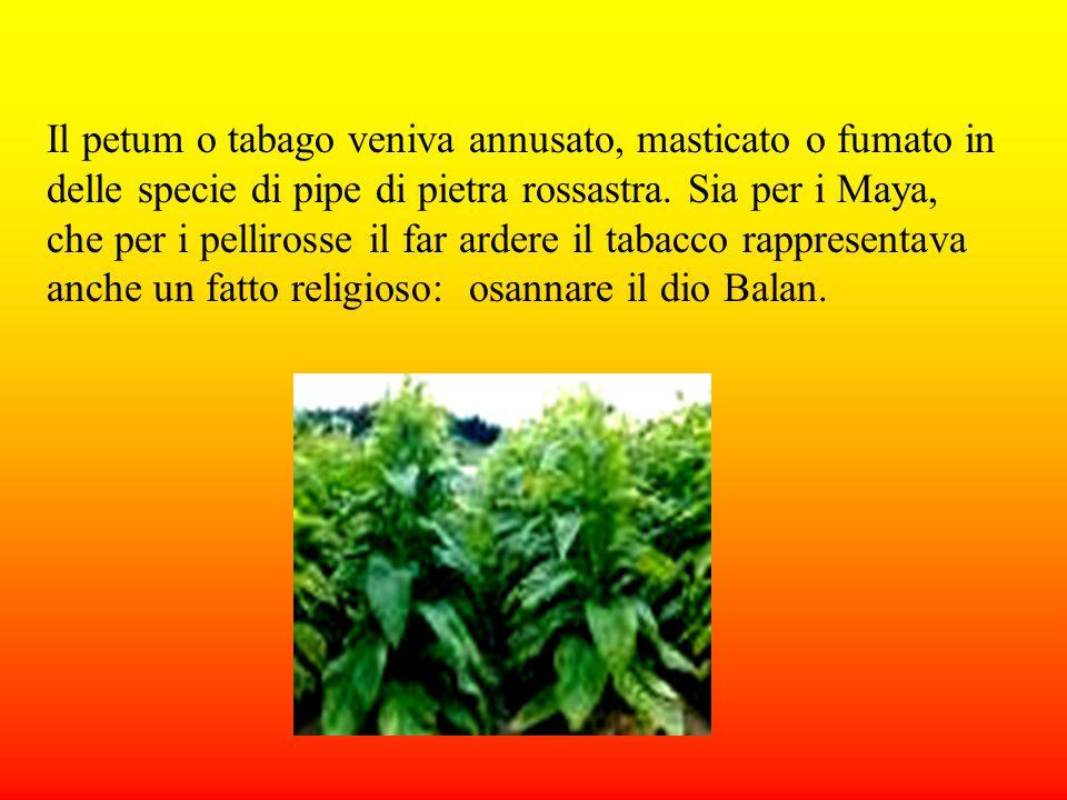 Il petum o tabago veniva annusato, masticato o fumato in delle specie di pipe di pietra rossastra.