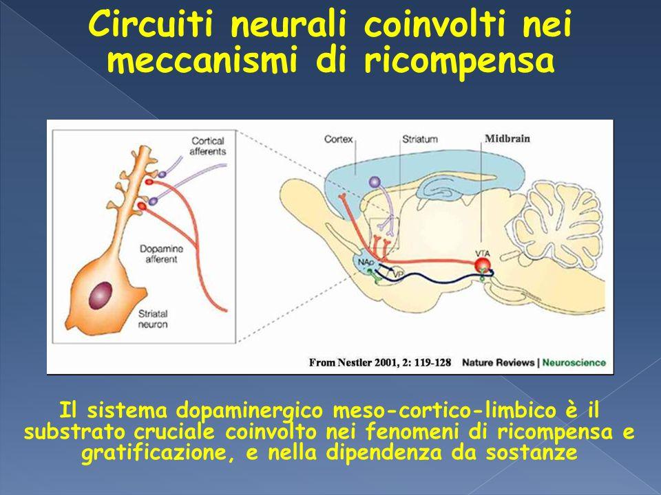 Circuiti neurali coinvolti nei meccanismi di ricompensa
