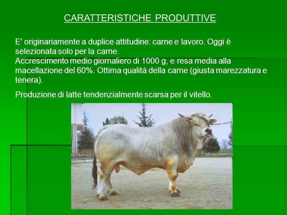 CARATTERISTICHE PRODUTTIVE
