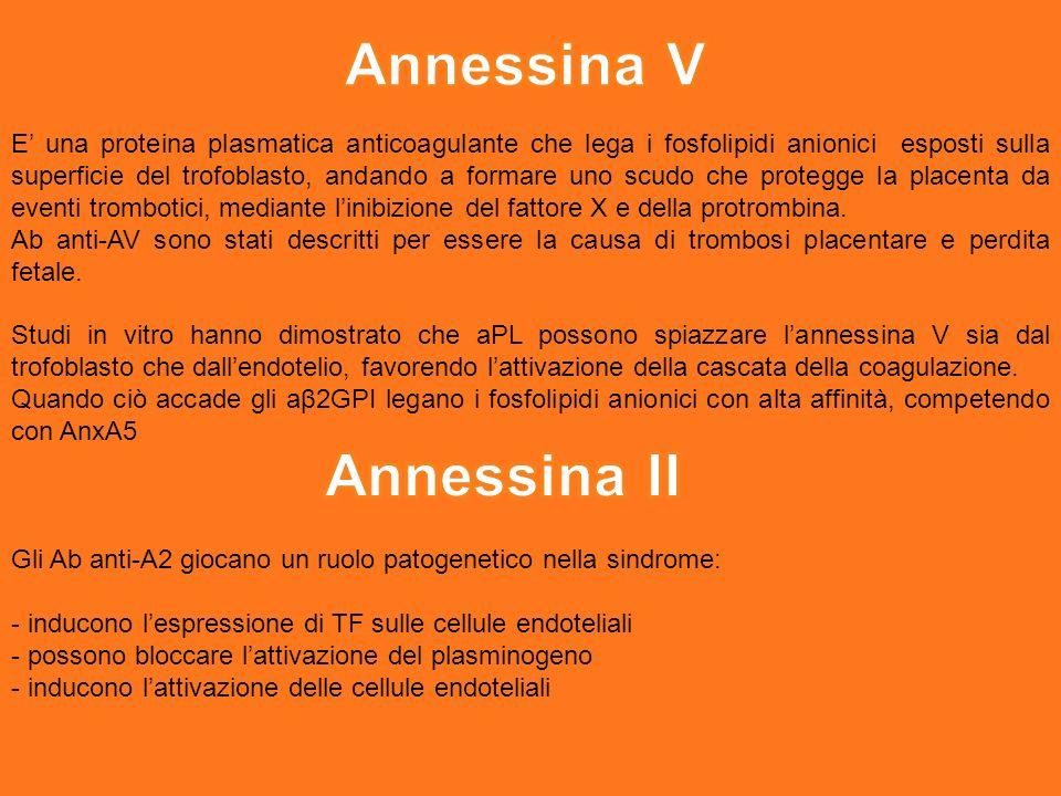 Annessina V Annessina II
