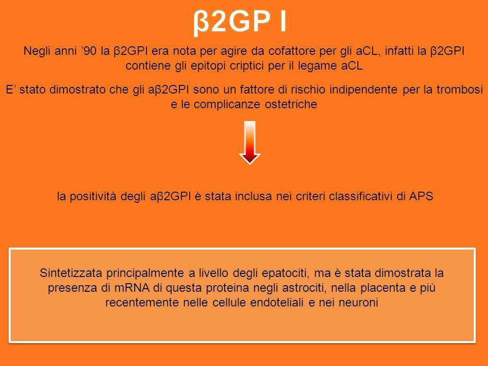 β2GP I Negli anni '90 la β2GPI era nota per agire da cofattore per gli aCL, infatti la β2GPI contiene gli epitopi criptici per il legame aCL.