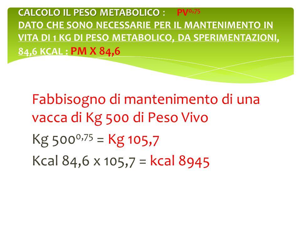 CALCOLO IL PESO METABOLICO : PV0,75 DATO CHE SONO NECESSARIE PER IL MANTENIMENTO IN VITA DI 1 KG DI PESO METABOLICO, DA SPERIMENTAZIONI, 84,6 KCAL : PM X 84,6