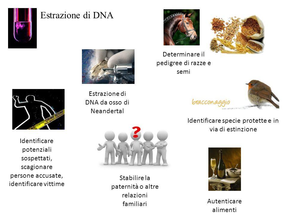 Estrazione di DNA Determinare il pedigree di razze e semi