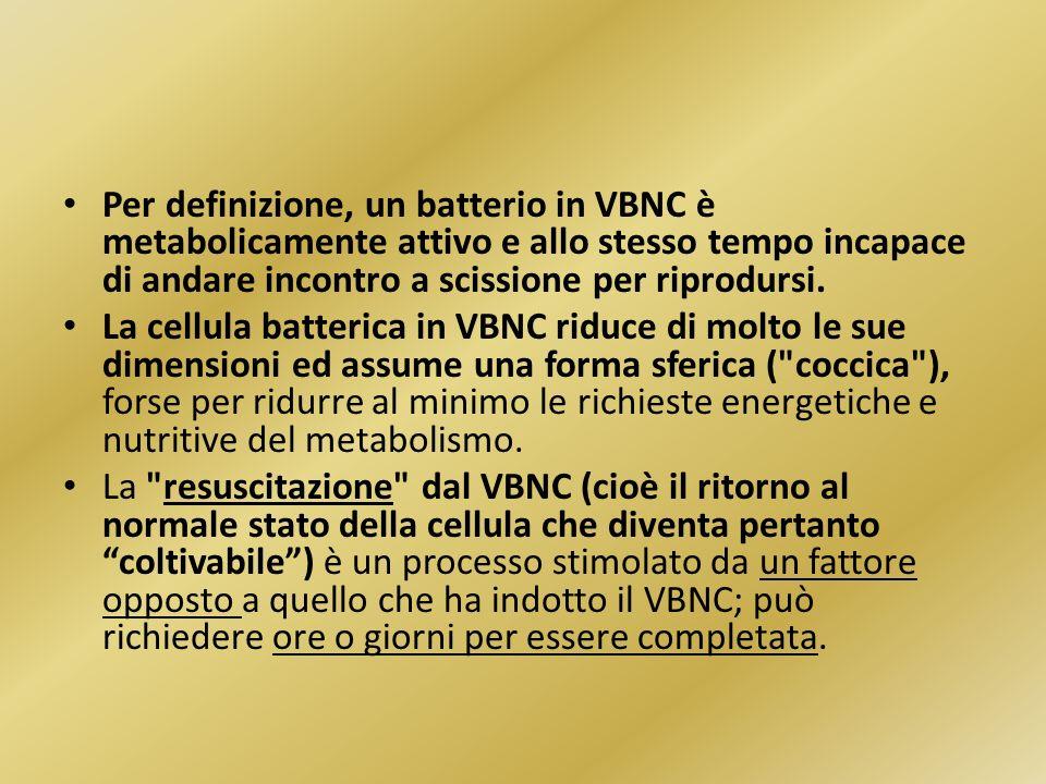 Per definizione, un batterio in VBNC è metabolicamente attivo e allo stesso tempo incapace di andare incontro a scissione per riprodursi.