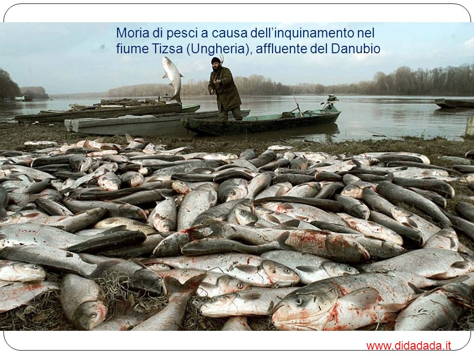 Il Danubio inoltre è ormai drammaticamente inquinato