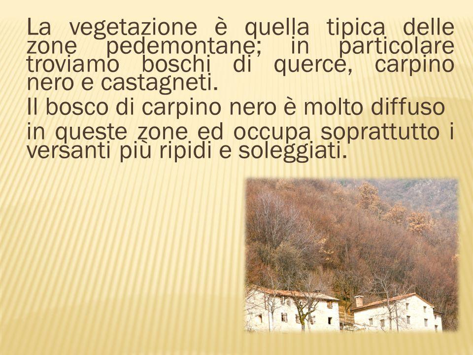 La vegetazione è quella tipica delle zone pedemontane; in particolare troviamo boschi di querce, carpino nero e castagneti.