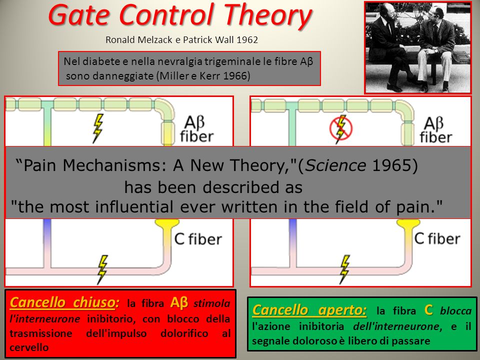 Gate Control Theory Ronald Melzack e Patrick Wall 1962