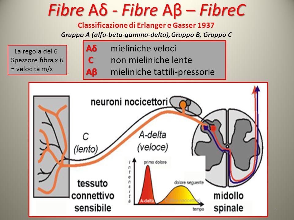Fibre Aδ - Fibre Aβ – FibreC Classificazione di Erlanger e Gasser 1937 Gruppo A (alfa-beta-gamma-delta), Gruppo B, Gruppo C