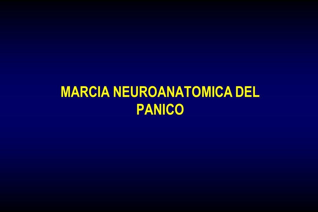 MARCIA NEUROANATOMICA DEL PANICO