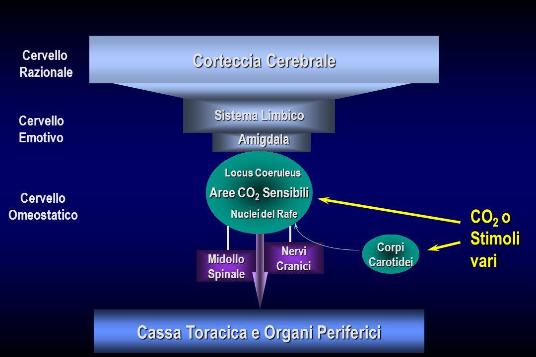 Cassa Toracica e Organi Periferici