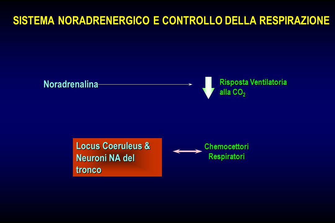 SISTEMA NORADRENERGICO E CONTROLLO DELLA RESPIRAZIONE