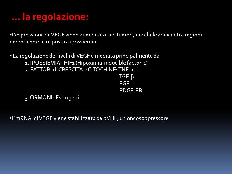 … la regolazione: L'espressione di VEGF viene aumentata nei tumori, in cellule adiacenti a regioni necrotiche e in risposta a ipossiemia.
