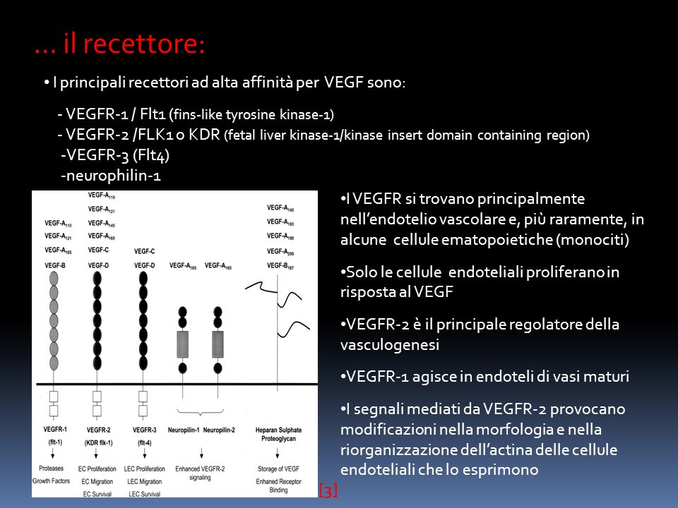 … il recettore: I principali recettori ad alta affinità per VEGF sono: