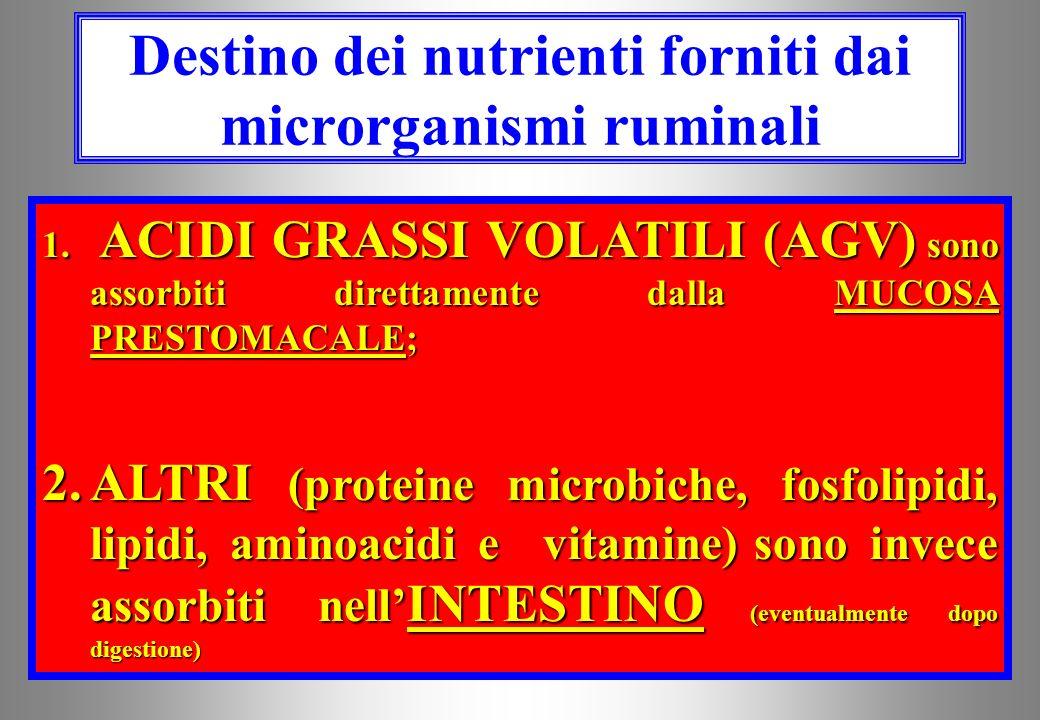 Destino dei nutrienti forniti dai microrganismi ruminali