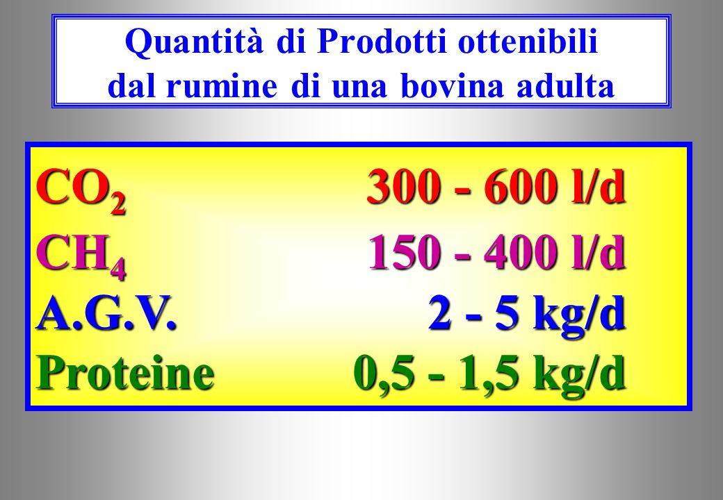 Quantità di Prodotti ottenibili dal rumine di una bovina adulta