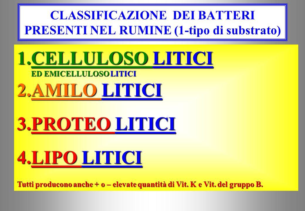 CLASSIFICAZIONE DEI BATTERI PRESENTI NEL RUMINE (1-tipo di substrato)