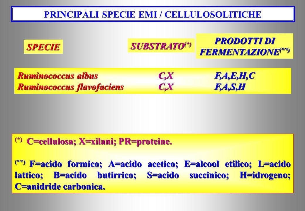 PRINCIPALI SPECIE EMI / CELLULOSOLITICHE