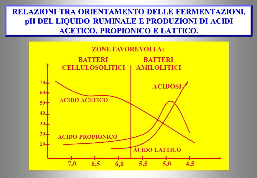 RELAZIONI TRA ORIENTAMENTO DELLE FERMENTAZIONI, pH DEL LIQUIDO RUMINALE E PRODUZIONI DI ACIDI ACETICO, PROPIONICO E LATTICO.