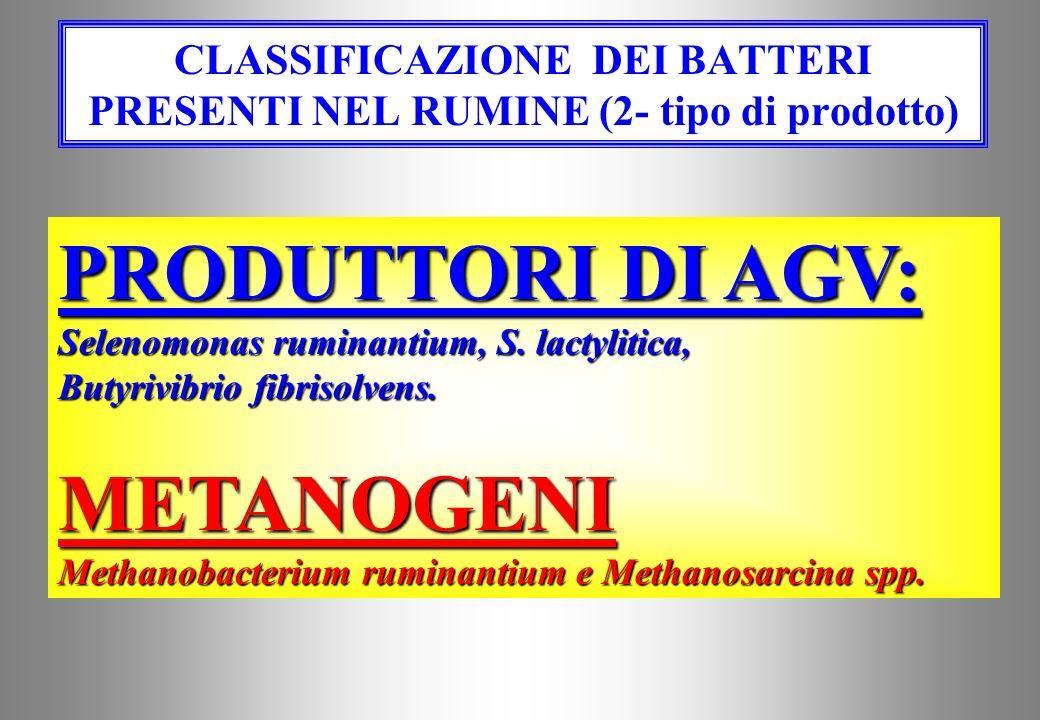 CLASSIFICAZIONE DEI BATTERI PRESENTI NEL RUMINE (2- tipo di prodotto)