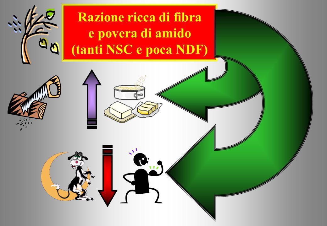 Razione ricca di fibra e povera di amido (tanti NSC e poca NDF)