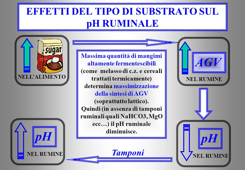 EFFETTI DEL TIPO DI SUBSTRATO SUL pH RUMINALE