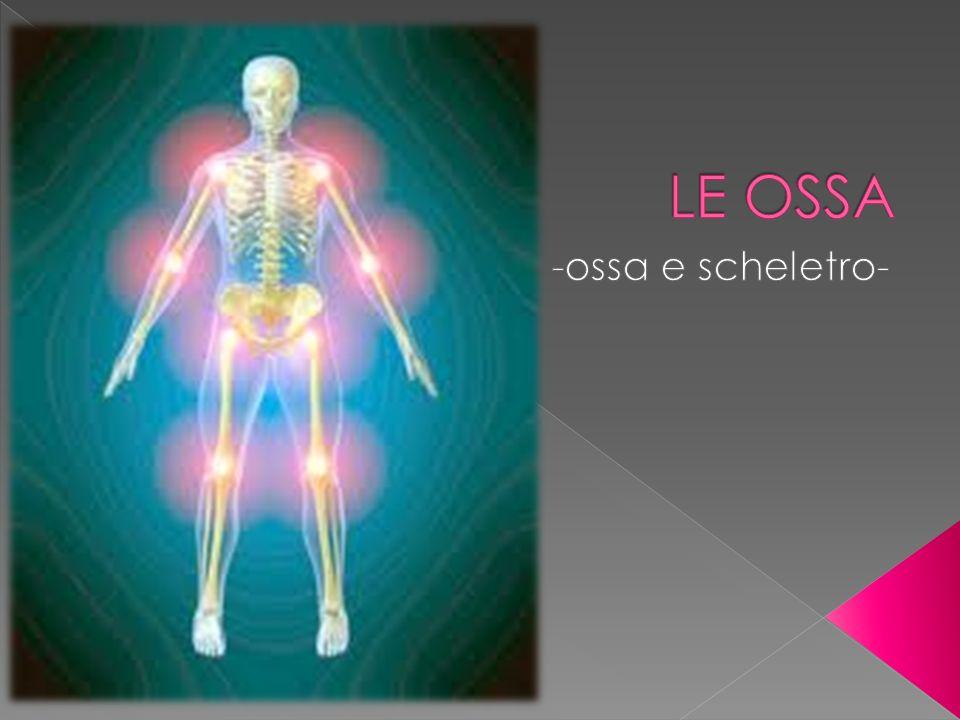 LE OSSA -ossa e scheletro-