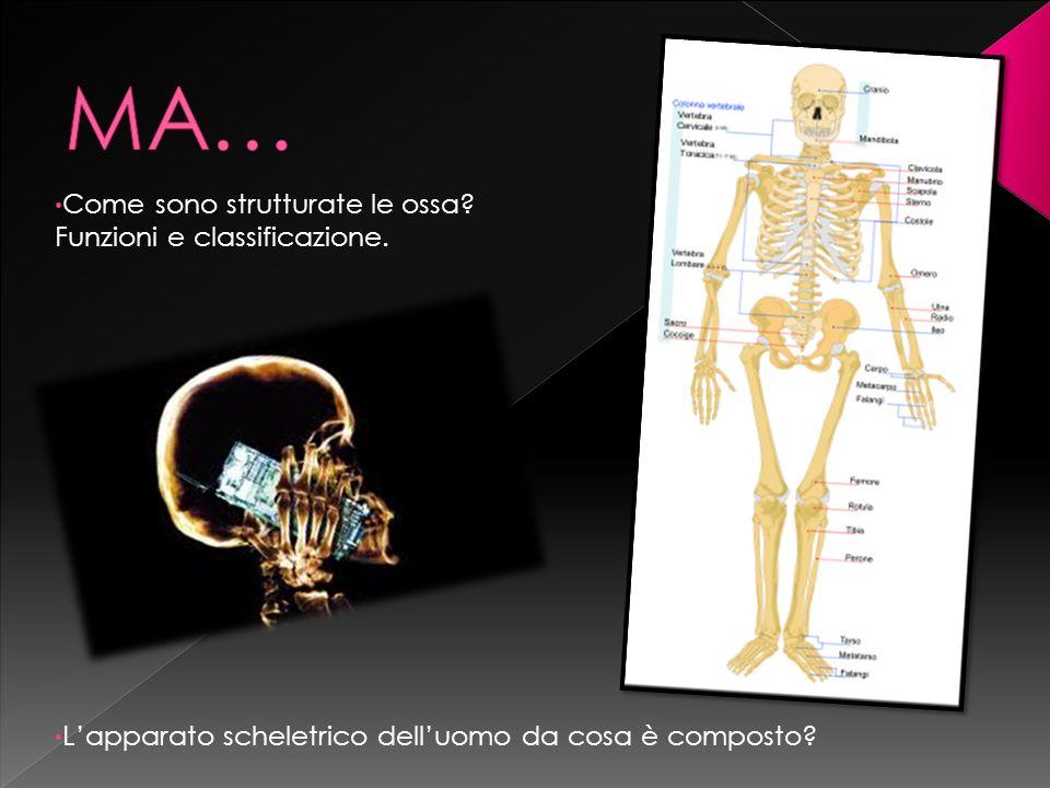MA… Come sono strutturate le ossa Funzioni e classificazione.