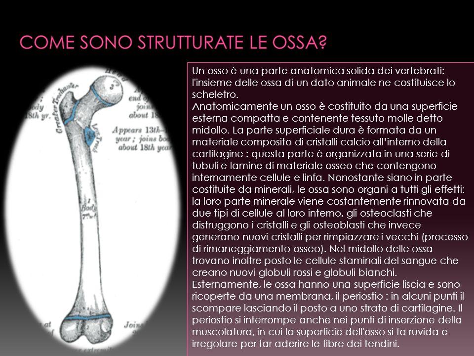 Come sono strutturate le ossa