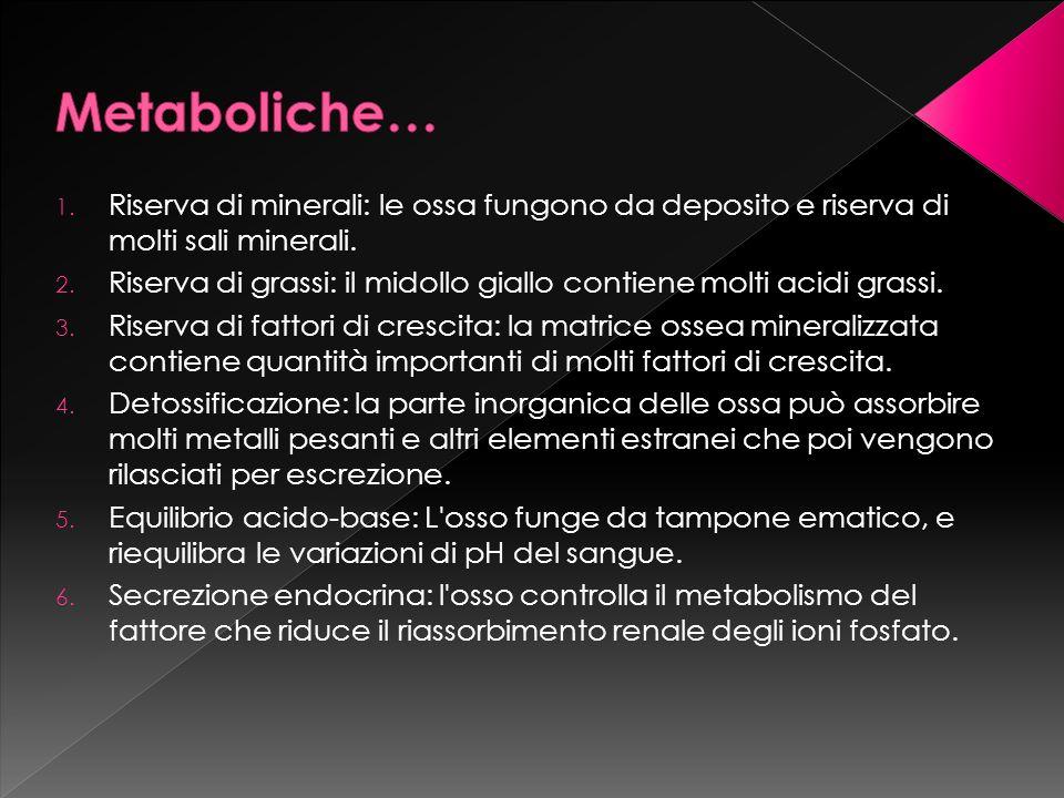 Metaboliche… Riserva di minerali: le ossa fungono da deposito e riserva di molti sali minerali.