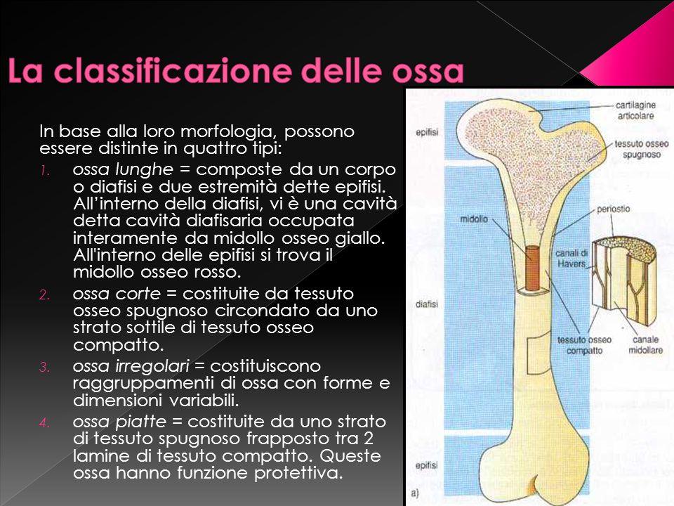 La classificazione delle ossa