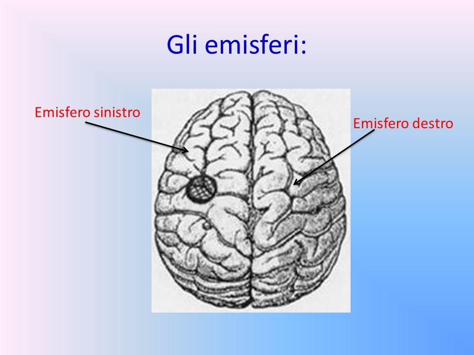 Gli emisferi: Emisfero sinistro Emisfero destro