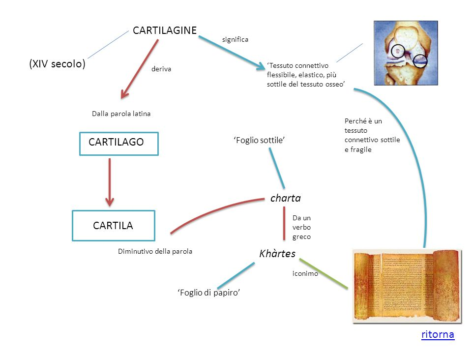 CARTILAGINE (XIV secolo) CARTILAGO charta CARTILA Khàrtes ritorna