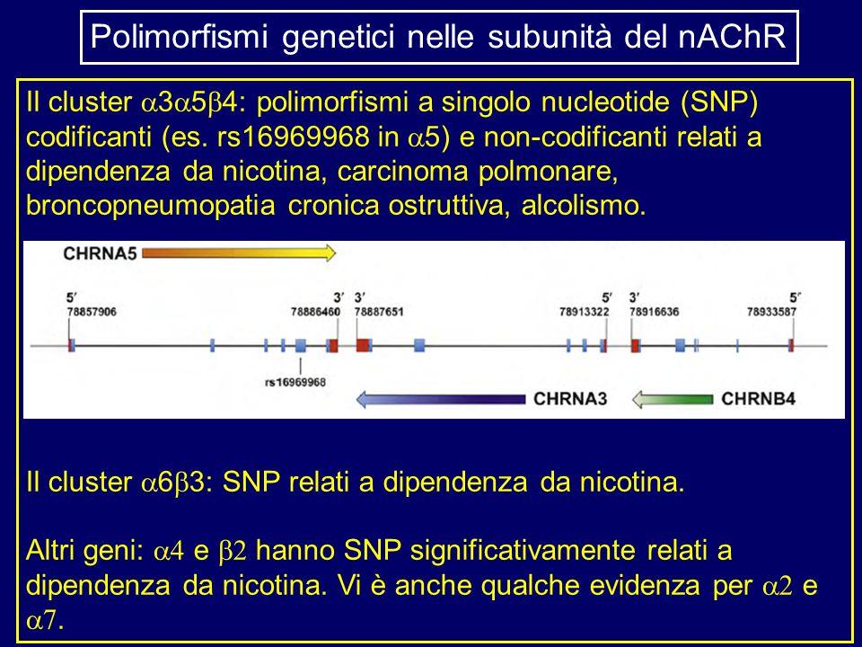 Polimorfismi genetici nelle subunità del nAChR