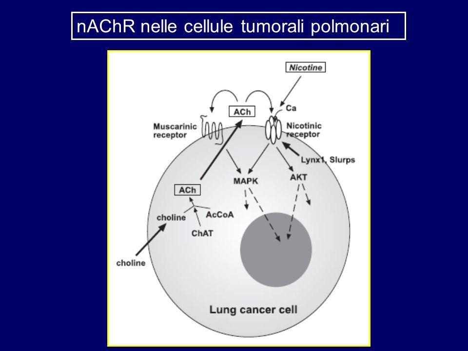 nAChR nelle cellule tumorali polmonari
