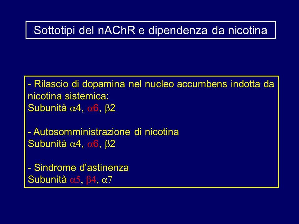 Sottotipi del nAChR e dipendenza da nicotina