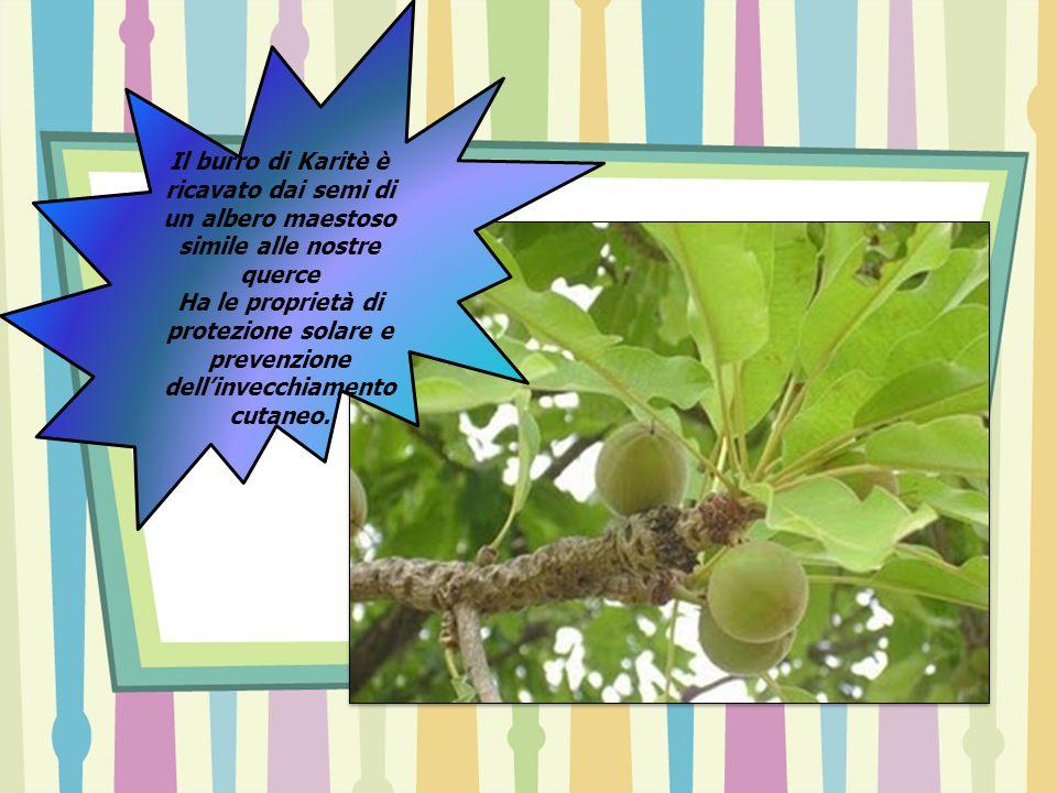 Il burro di Karitè è ricavato dai semi di un albero maestoso simile alle nostre querce