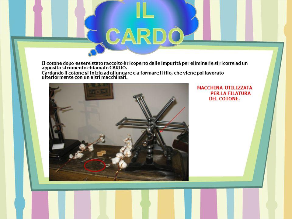 IL CARDO Il cotone dopo essere stato raccolto è ricoperto dalle impurità per eliminarle si ricorre ad un apposito strumento chiamato CARDO.