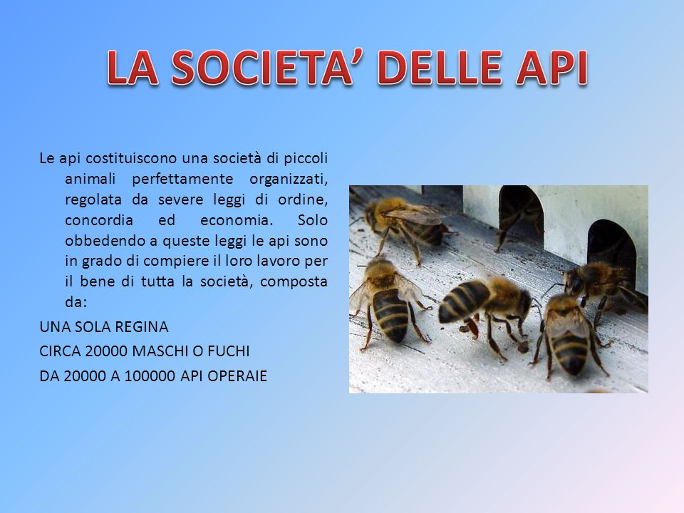 LA SOCIETA' DELLE API