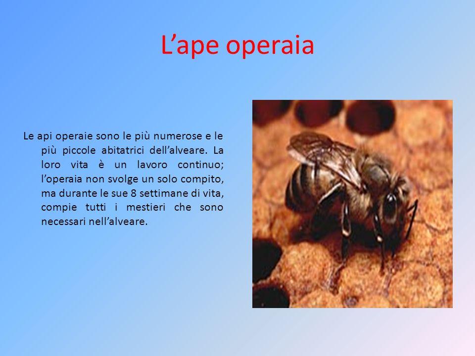L'ape operaia