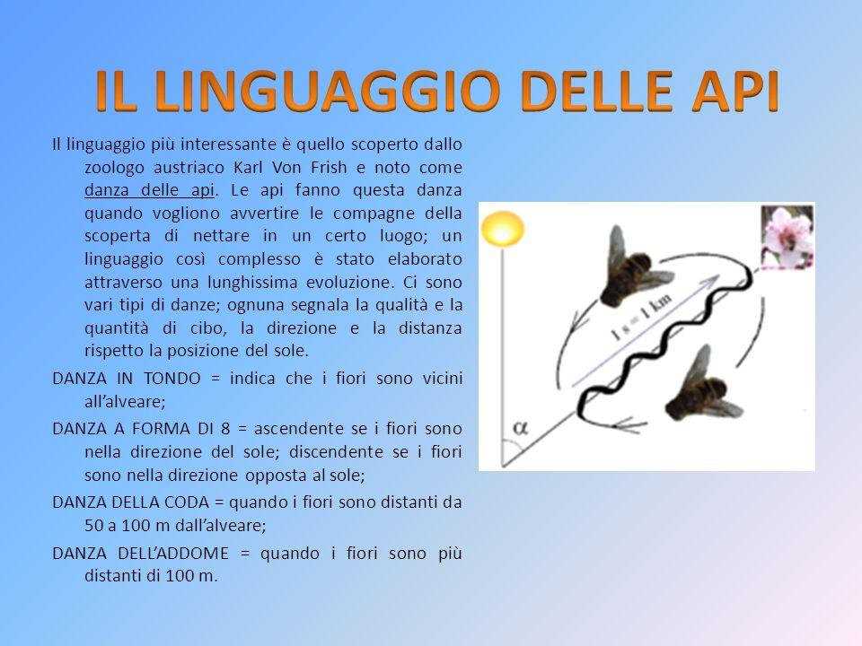 IL LINGUAGGIO DELLE API