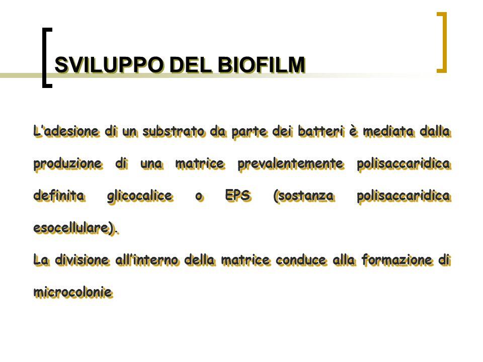 SVILUPPO DEL BIOFILM